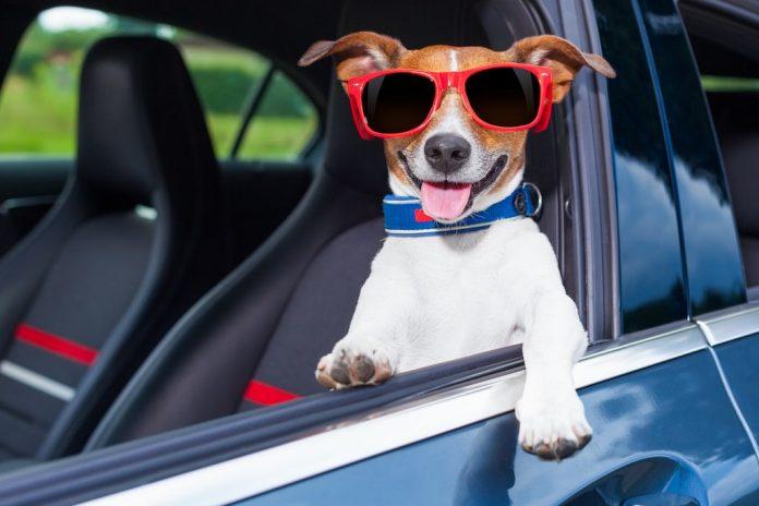 Trasporto cani in auto